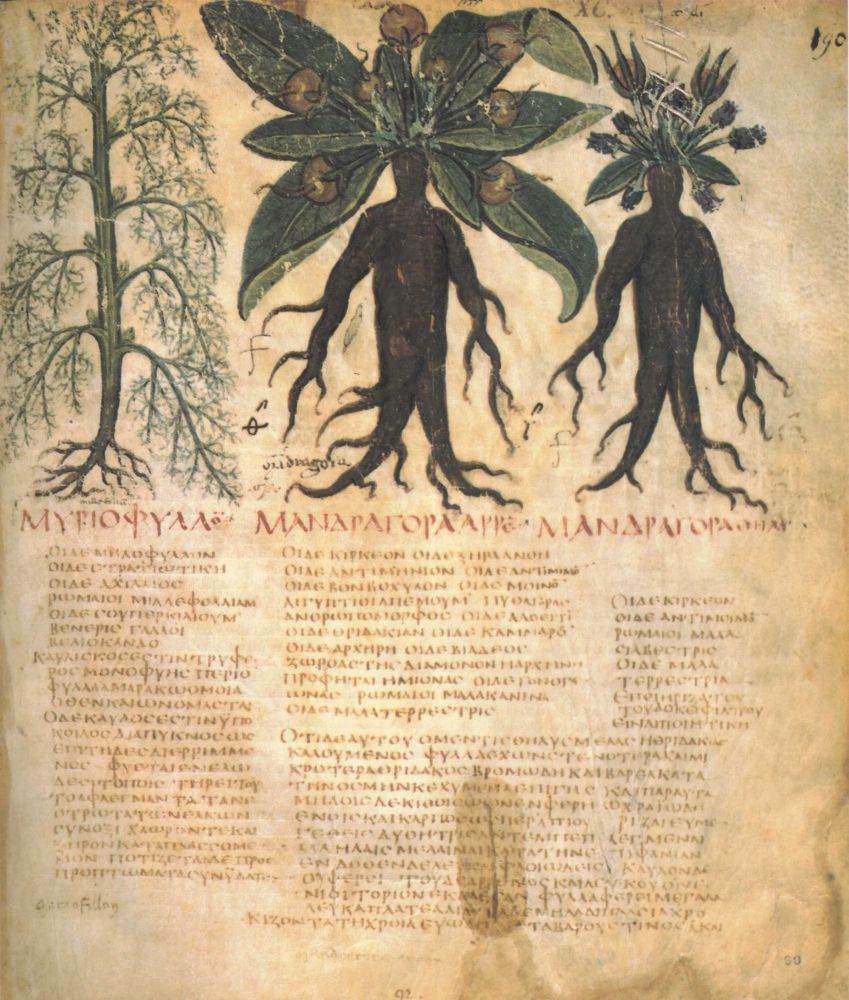 The Magic of Mandrake