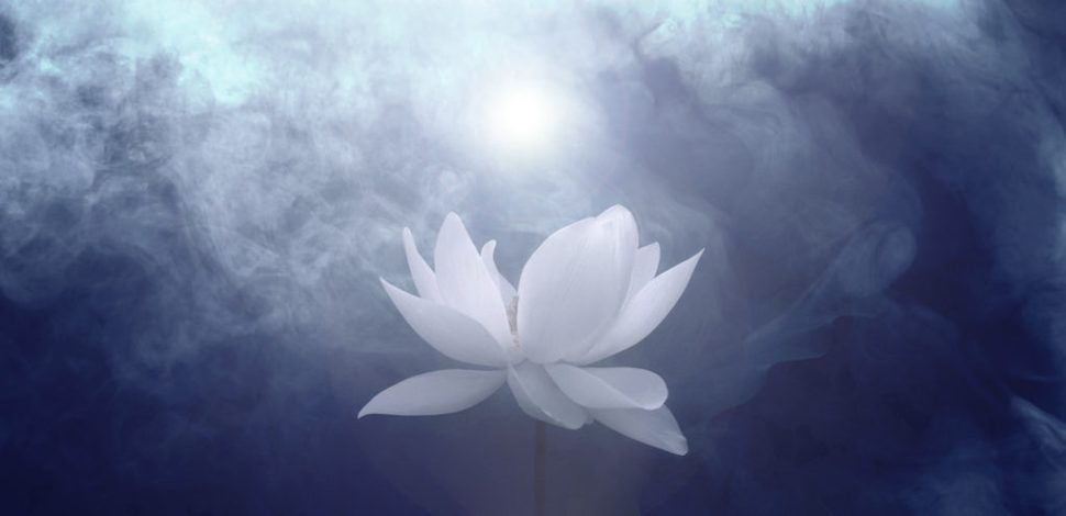 of the white lotus path